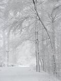 Snow-covered hout royalty-vrije stock foto's