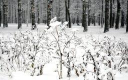 Snow-covered installaties tegen de winterbos Royalty-vrije Stock Afbeelding