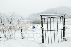 Snow-covered iron gate and wire entanglements. In Korea Royalty Free Stock Images