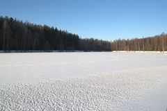 Snow-covered lake. Snow wood the blue sky Royalty Free Stock Photography