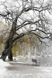 Snow Covered Lake and Bench. This image was taken In Vancouver, Canada's Stanly Park during a snowfall. The image was captured with a Nikon D200 Royalty Free Stock Image