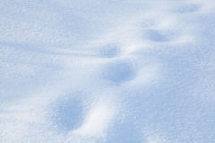 Snow-covered land closeup winter day Royalty Free Stock Photo