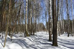Snow-covered landscape, as if the road divides into two parts. On the one hand there is a forest and a few birches near the roadside. And on the other, as if royalty free stock photos