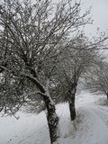 Snow-covered landscape with a beautiful avenue with big trees in a small village in Kassel, Germany royalty free stock photos
