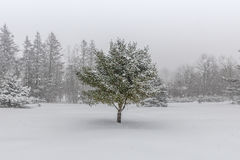 Snow Covered Landscape with Centered Pine Tree. A snow covered landscape showing with a snow covered pine tree during a winter storm royalty free stock photography
