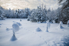 Snow-covered landscape in the countryside Royalty Free Stock Photography