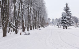 Snow-covered landscape in the park. Stock Images