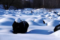 Snow-covered landscape Stock Images