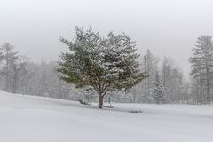 Snow Covered Landscape with  Tree Royalty Free Stock Images
