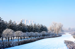 Snow-Covered Landschap Stock Foto