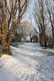 Snow covered lane Stock Photos