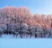 From the snow covered lawn there is a view to nice trees covered by frost. Stock Photography