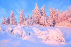From the snow covered lawn there is a view to nice trees covered by frost and snow. Light pink sun rays of sunset. From the snow covered lawn there is a view to stock photo