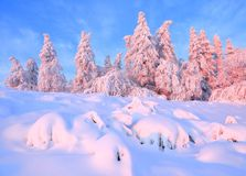 From the snow covered lawn there is a view to nice trees covered by frost and snow. Light pink sun rays of sunset. From the snow covered lawn there is a view to stock image