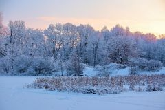 From the snow covered lawn there is a view to nice trees covered by frost and snow. Royalty Free Stock Photo