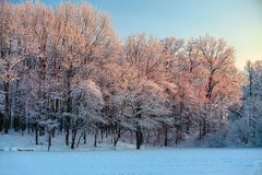 From the snow covered lawn there is a view to nice trees covered by frost and snow. Stock Image