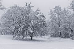 Snow covered and leaf filled trees Royalty Free Stock Images
