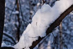 Snow covered leafless trees and shrubs in winter. Snow covered branches and trunks of trees and shrubs of deciduary forest. Joy and beauty of cold winter season Royalty Free Stock Image
