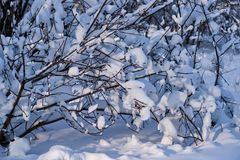 Snow covered leafless trees and shrubs in winter. Snow covered branches and trunks of trees and shrubs of deciduary forest. Joy and beauty of cold winter season Royalty Free Stock Photos