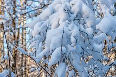 Snow covered leafless trees and shrubs in winter. Snow covered branches and trunks of trees and shrubs of deciduary forest. Joy and beauty of cold winter season Royalty Free Stock Images