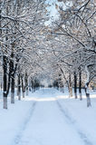Snow-covered linden alley Stock Photography