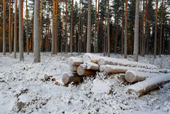 Snow Covered Logs. A small pile of snow and frost covered logs at the edge of forest on a very cold day at dusktime. Photographed in Tuohittu, Finland, in Stock Images