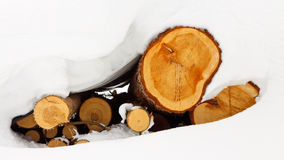 Snow Covered Logs Stock Images