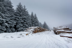Snow covered logs and fur trees. On a cold, foggy winter day royalty free stock image