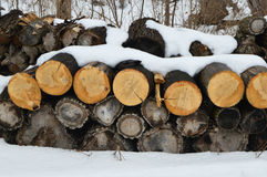 Snow Covered Logs Stock Photography