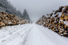 Snow covered logs on a remote track. Snow covered logs line a remote snowy tack royalty free stock photo