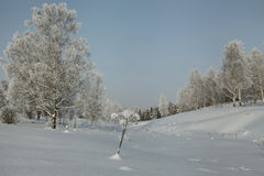 Snow covered lowland with birches and other trees Royalty Free Stock Photography