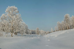 Snow covered lowland with birches and other trees Stock Photos