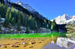 Snow covered Maroon Bells mountains with colorful yellow, green and red aspen during foliage season Royalty Free Stock Images