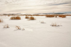 Snow Covered Marsh. Landscape of a snow covered marsh with warm light Stock Images