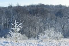 Snow covered meadow with bushes and grass in front of the dark winter forest, copy space stock images