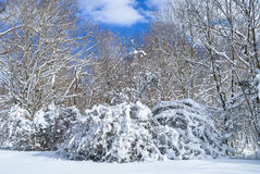 Snow Covered Meadow Stock Images