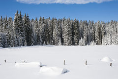 Snow covered meadow with trees in the background. Snow covered meadow with spruce trees in the background Stock Photography