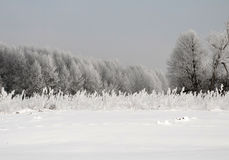 Snow-covered meadow and trees in January, on a frosty morning. H Stock Photos