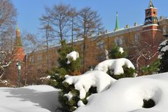 Snow-covered Moscow. Landscaped park after heavy snowfall. Snow on branch Royalty Free Stock Photo