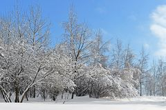 Snow-covered Moscow. Mitino Landscaped park after heavy snowfall Royalty Free Stock Photography