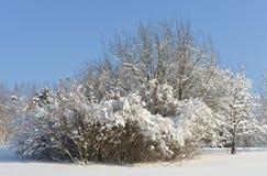 Snow-covered Moskou Gemodelleerd park na zware sneeuwval royalty-vrije stock afbeelding