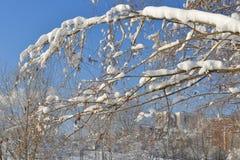Snow-covered Moskou Gemodelleerd park na zware sneeuwval Sneeuw op tak royalty-vrije stock fotografie