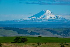 Snow-covered Mount Adams rising above Oregon wheat fields. Southern side of snow-covered Mount Adams rising above Oregon wheat fields Royalty Free Stock Photo