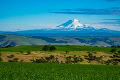 Snow-covered Mount Adams rising above Oregon wheat fields. Southern side of snow-covered Mount Adams rising above Oregon wheat fields Royalty Free Stock Image