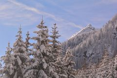 Snow covered mountain crests and forest. Winter scenery in Kaunertal valley, Tyrol , Austria. Snowy Austrian Alps. Forest and alpine crests stock photos