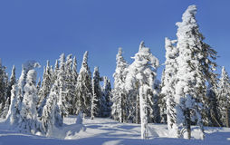 Snow covered mountain forest Royalty Free Stock Photography