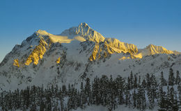 Snow covered mountain of Mt. Shuksan bathed in golden light stock photos