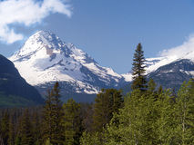Snow covered mountain peak. At Glacier National Park Montana.  Green forest  at lower elevations, Aspen trees Stock Image