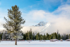 Snow covered mountain and pine tree clearing fog stock images