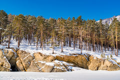 Snow covered the mountain and the pine trees Stock Image